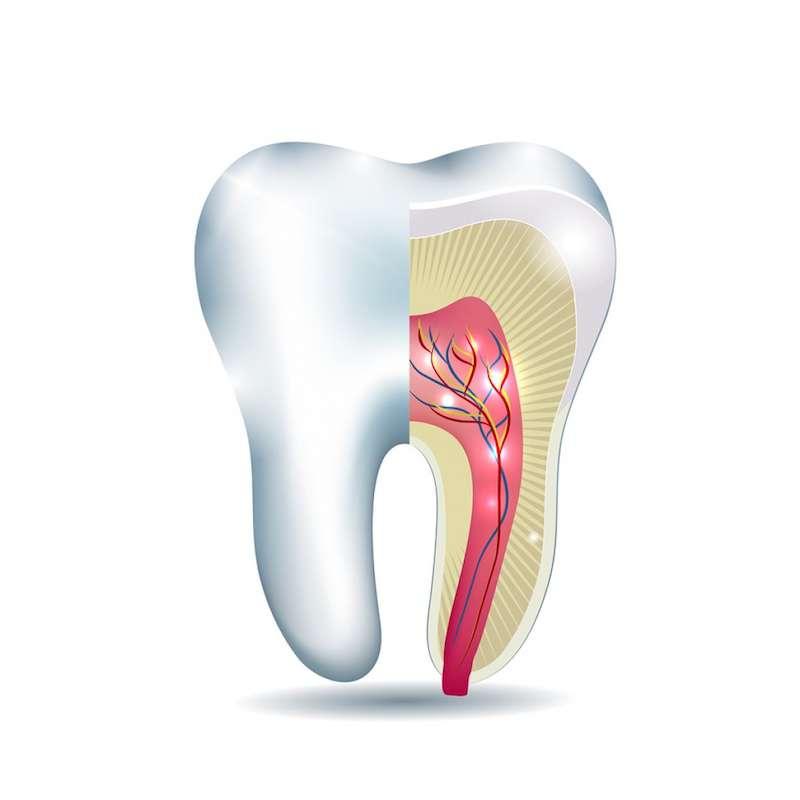 Unerwienie zęba